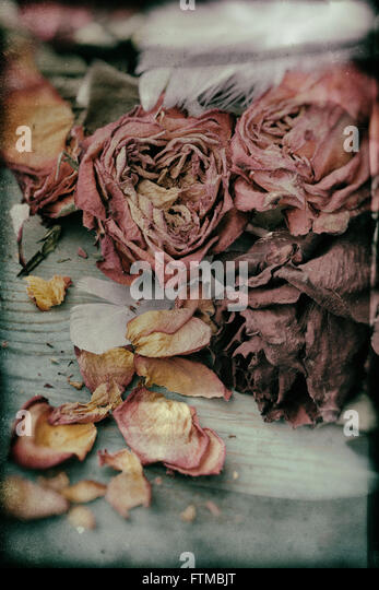 Image of dried vintage nostalgic roses background texture. - Stock Image