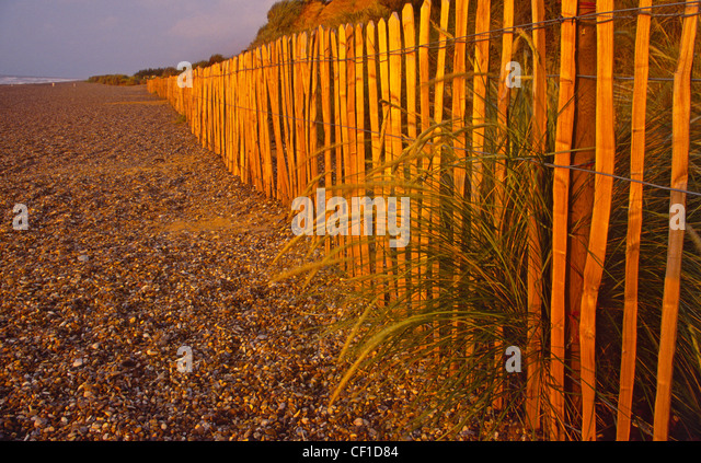 Dune fencing on Dunwich beach. - Stock Image