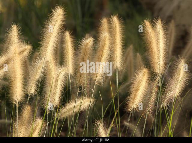 grass kinds group of light the against. - Stock-Bilder