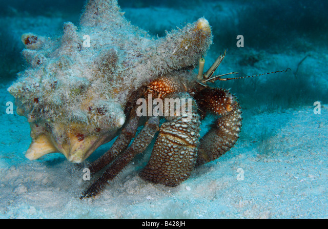bottom dwellers in the ocean The food these large predators waste drifts to the bottom of the ocean where lobsters and other bottom dwellers feed on it some of the food is also decomposed by bacteria and returned to the soil where plants can use its nutrients.