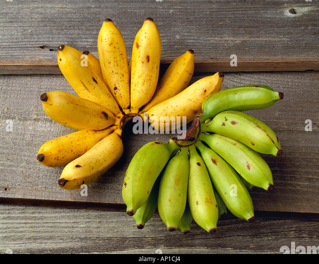 Agriculture - Apple bananas, one bunch ripe and one bunch green, on a barnwood surface, in studio. - Stock Image
