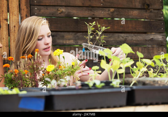 Young woman gardening. - Stock Image