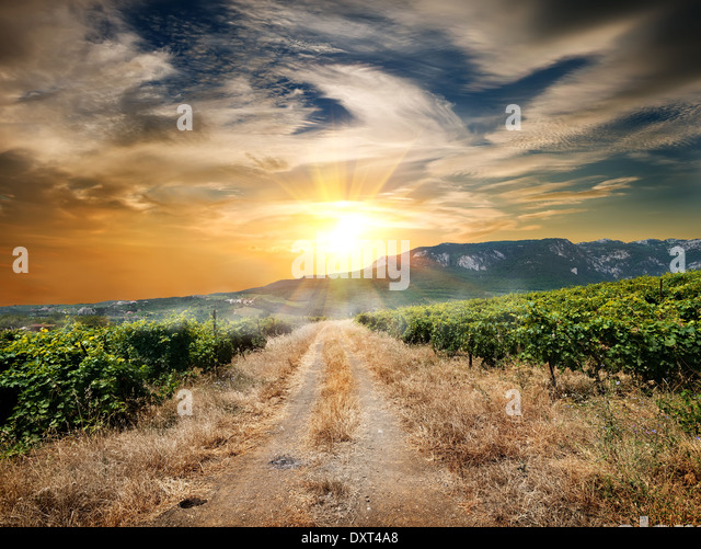 Country road through a vineyard in autumn - Stock Image