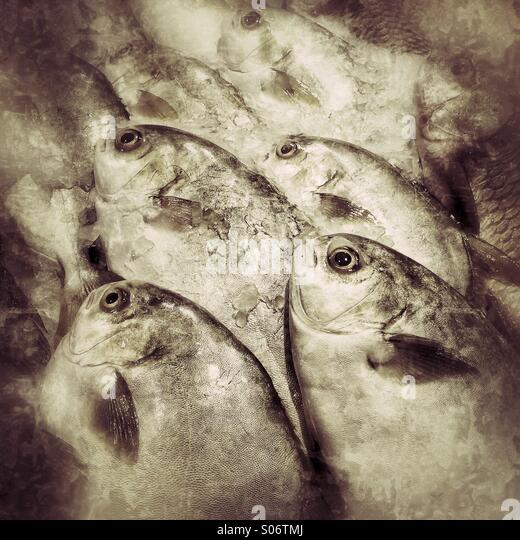 Fresh fish for sale at wet market - Stock Image