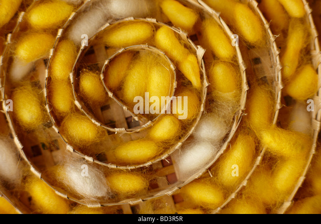 silk worm cocoons at a weaving centre in Luang Prabang, Laos - Stock Image