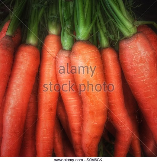 Orange Carrots with Green Tops - Stock Image