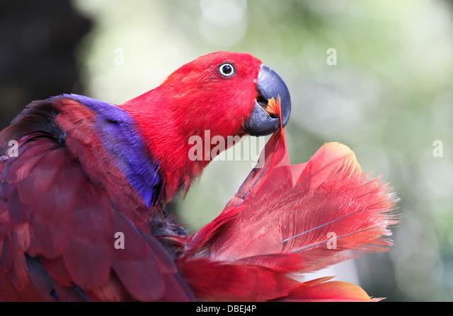 red parrot - Stock-Bilder