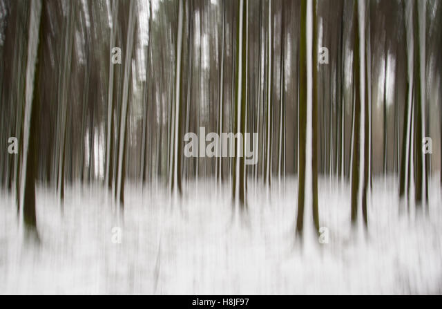 In camera motion blur of Bellever Woods in winter on Dartmoor, South Devon, UK  giving the impression of a barcode. - Stock Image