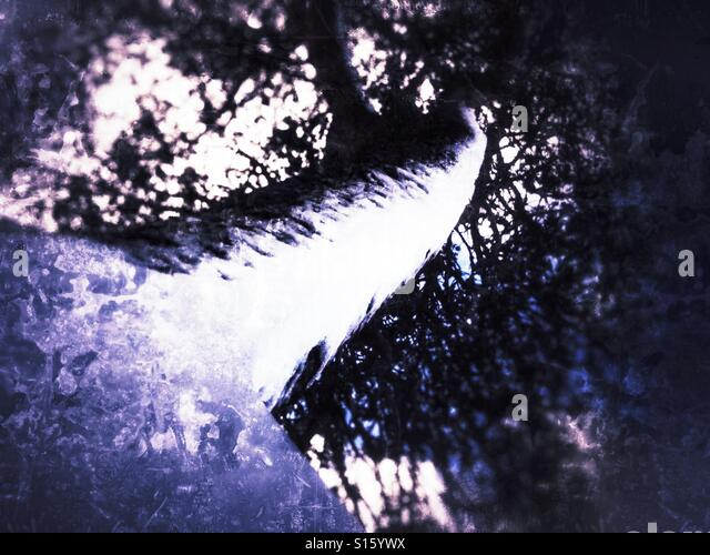 Snow covered tree - Stock Image
