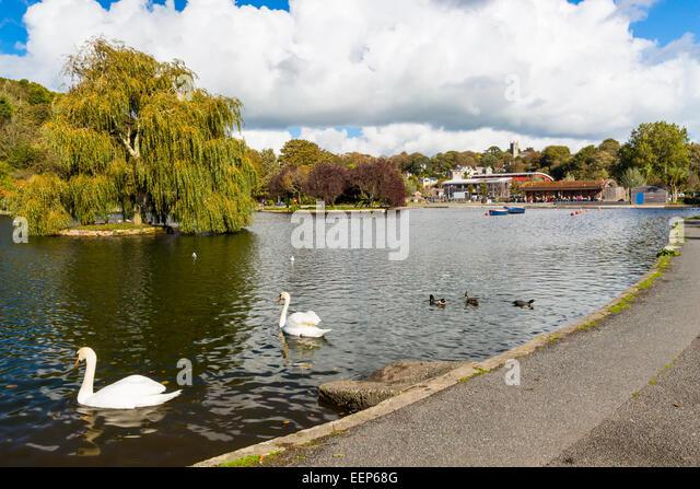 Helston Boating Lake Cornwall England UK Europe - Stock Image