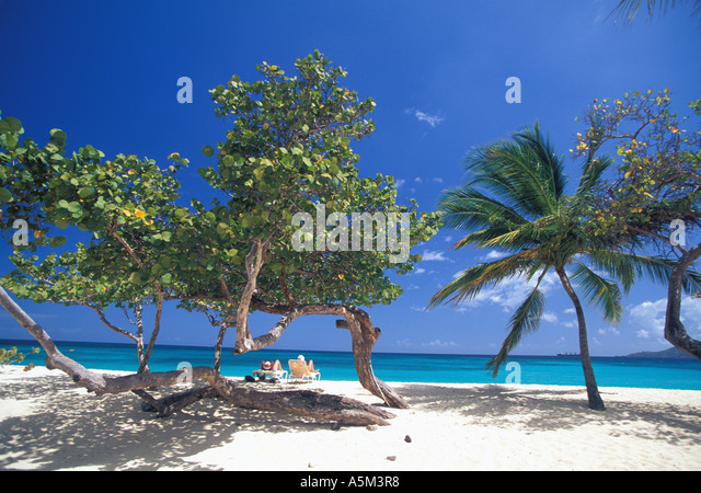 Grenada beach mature couple relaxing on Grand Anse beach in lounge chairs surrounded by seagrape and palm trees - Stock Image