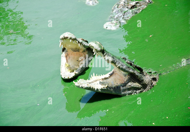 Croc Leather Stock Photos Amp Croc Leather Stock Images Alamy