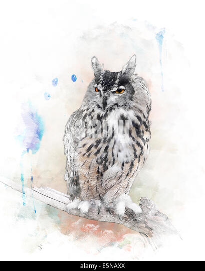 Watercolor Digital Painting Of   Perching Owl - Stock-Bilder