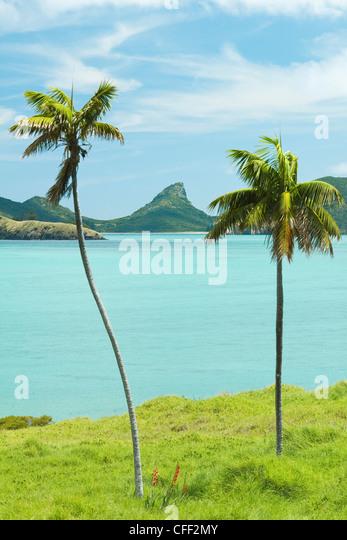 Endemic Kentia palms, Tasman Sea, Lord Howe Island, New South Wales, Australia - Stock Image