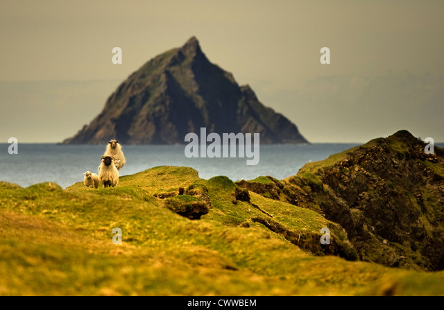 Sheep grazing on grassy hillside - Stock Image