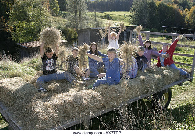 West Virginia Frankford Miller's 'Mazing Corn Maze hayride - Stock Image