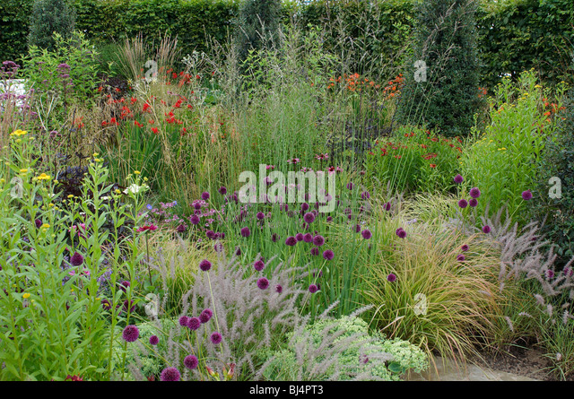 Border garden allium grass stock photos border garden for Border grasses for landscaping
