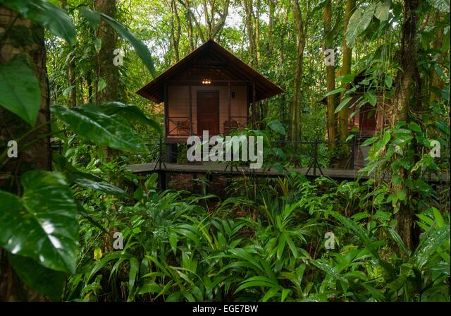 Forest tree house jungle stock photos forest tree house for Jungle house costa rica