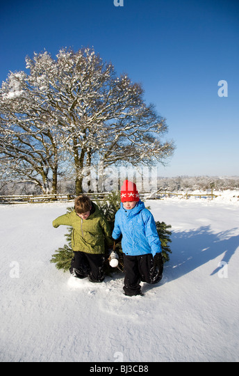 Children pulling christmas tree in snow - Stock Image