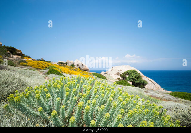 Small pathway to the beach surrounded by beautiful colored flowers. (selective focus) - Stock Image