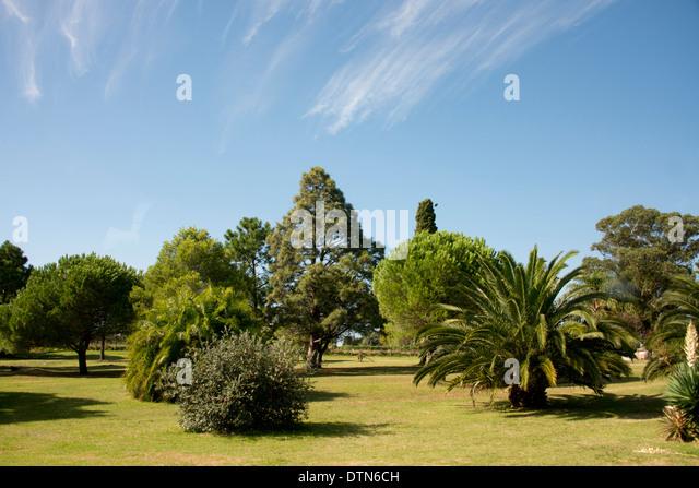 Uruguay, Montevideo. Prado Park. - Stock Image