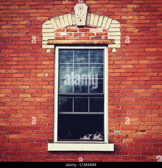 Cat in the window of a historic home - Stock Image