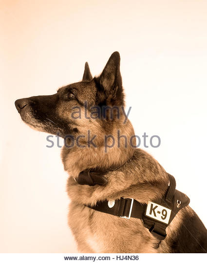 Rex War Hero Dog - Stock-Bilder