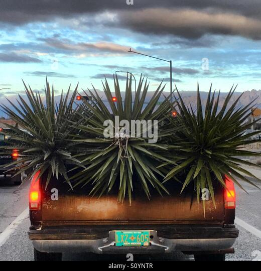 Car with cactus - Stock Image