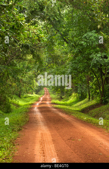 Dirt road through the Budongo Forest in the south of Murchison Falls National Park in Uganda. - Stock-Bilder