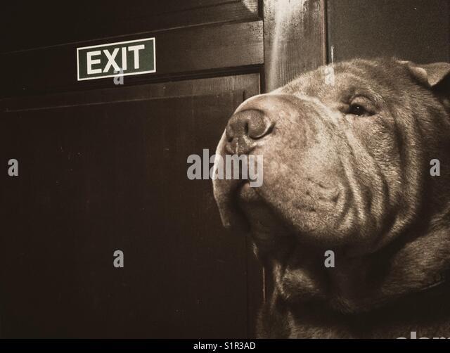 Guardian dog - Stock Image