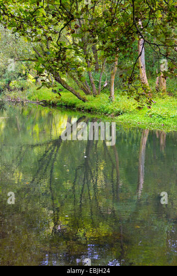 Reflections in lake old mill pond, Water-cum-Jolly, with trees, tranquil, peaceful, - Stock Image