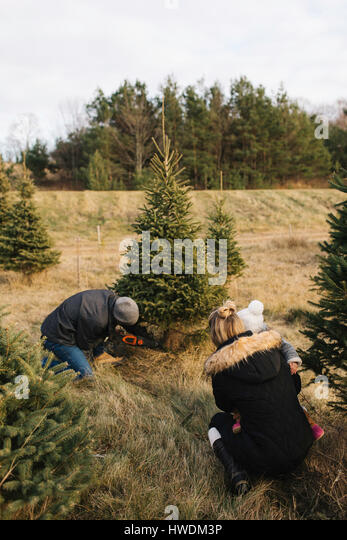 Mother and baby watching man cut tree in Christmas tree farm, Cobourg, Ontario, Canada - Stock-Bilder