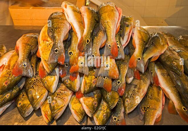 Manaus market stock photos manaus market stock images for River fish market