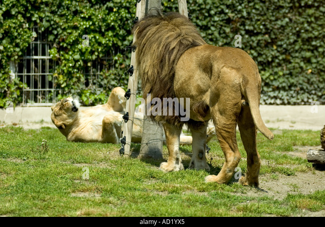 Plaies stock photos plaies stock images alamy for Zoo haute loire