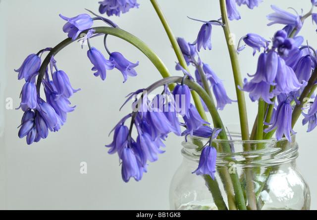 Bluebells in a jam jar - Stock Image