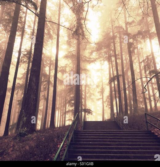 sunlight - Stock Image