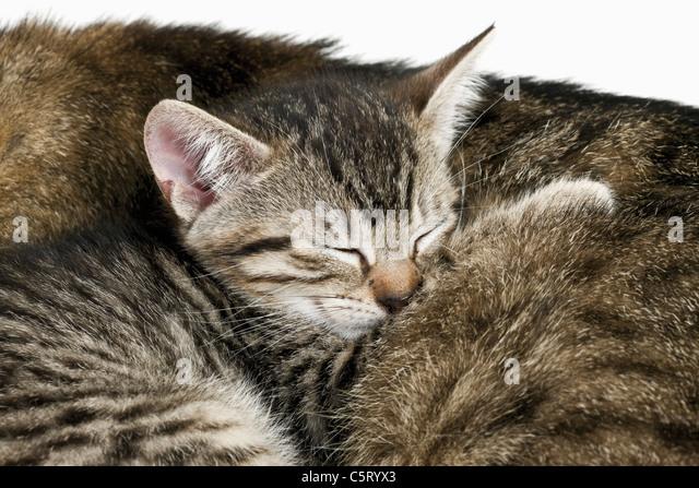 Cats Protection League Birmingham