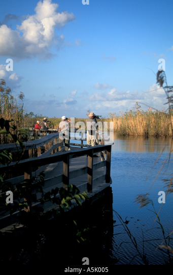 Florida Everglades National Park wildlife viewing at Anhinga Trail - Stock Image