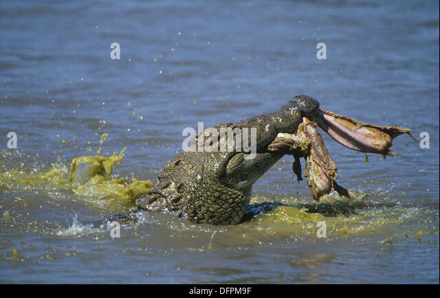Croc Eating Stock Photos & Croc Eating Stock Images - Alamy