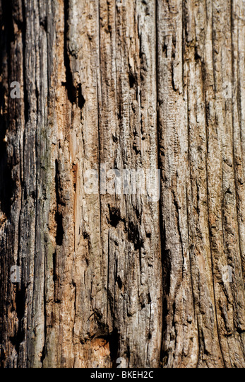 Weathered Wood Textured for background - Stock Image