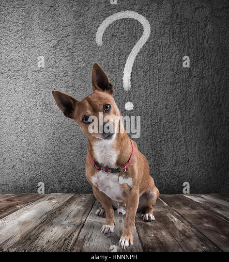 Dog with quizzical expression - Stock Image