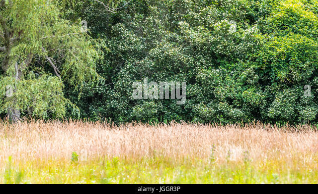 Border of long grass stock photos border of long grass for Tall border grass