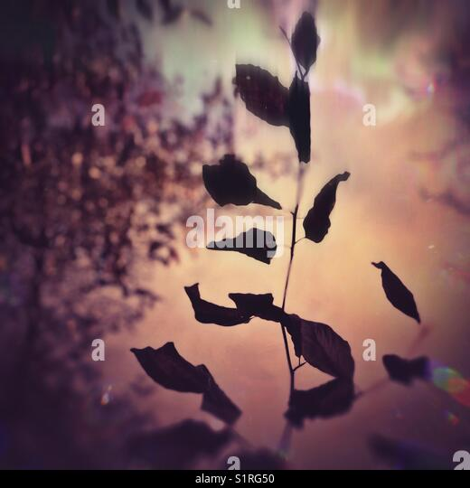 Abstract autumnal leaves - Stock Image