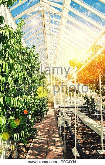 sunlight greenhouse - Stock Image