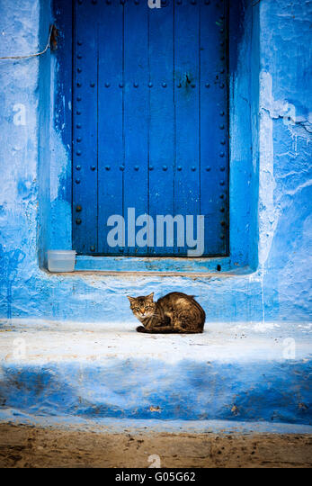 A cat in front of a door in Chefchaouen, Morocco. - Stock Image