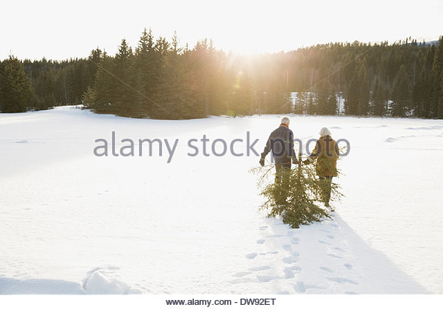 Rear view of couple dragging Christmas tree in snow - Stock-Bilder