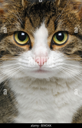 Cat Close Up - Stock Image