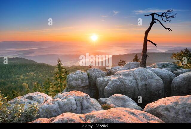 Single alone tree landscape at Sudety Mountains at sunrise, National Park, Poland - Stock Image