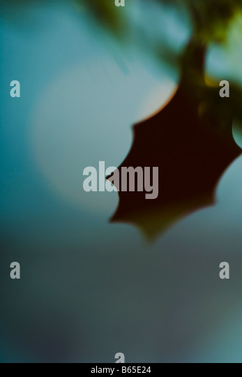 Decorative holly leaf, silhouette - Stock-Bilder