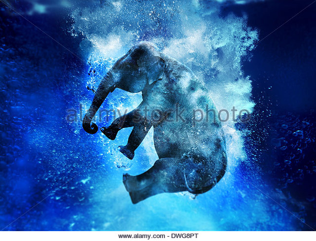 elephant jump - Stock-Bilder